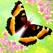 彩翼:蝴蝶保护区