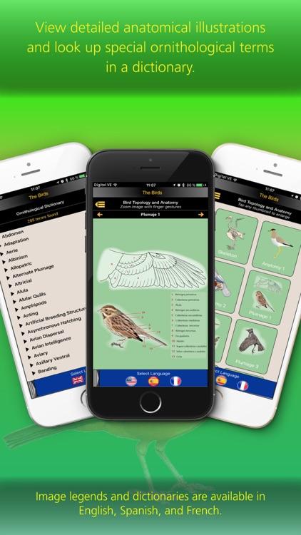 The Birds of Brazil screenshot-3