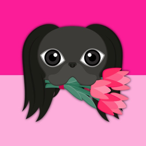 Black Japanese Chin