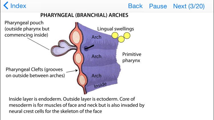 Embryology Lectures screenshot-1