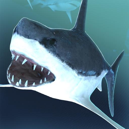 акула животное эволюция | акулы охота спорт игра