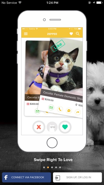 Zeppee - Find a Pet, Adopt a Pet, Lost and Found