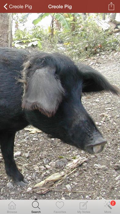 1500豚の品種、利用規約および医療資源用語集のおすすめ画像1
