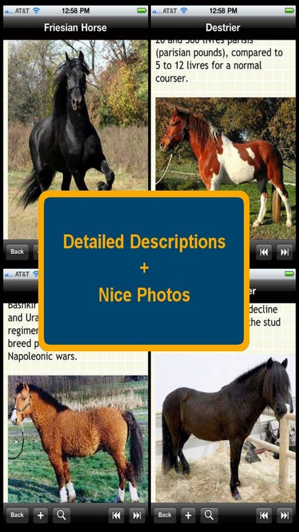 The Complete Horse & Pony Bible