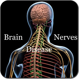 Brain and Nerves Disease