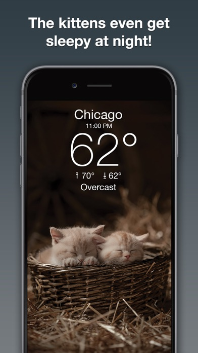 Weather Kitty: Forecast & Cats Screenshot