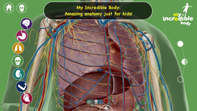 My Incredible Body - Guide to Learn About the Human Body for ...