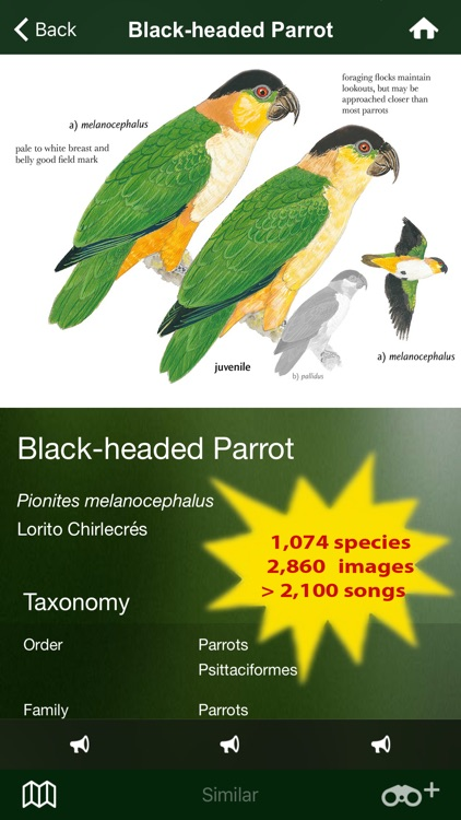 All Birds Northern Brazil - a field guide to all the bird species recorded in this region of South America