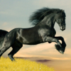 Horses Wallpapers HD - Wild Animals Pictures Free