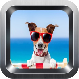 Learn English Via Dogs & Puppies Names Games for Kids