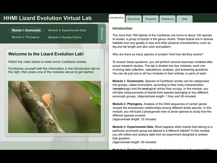 Lizard Evolution Virtual Lab screenshot-0