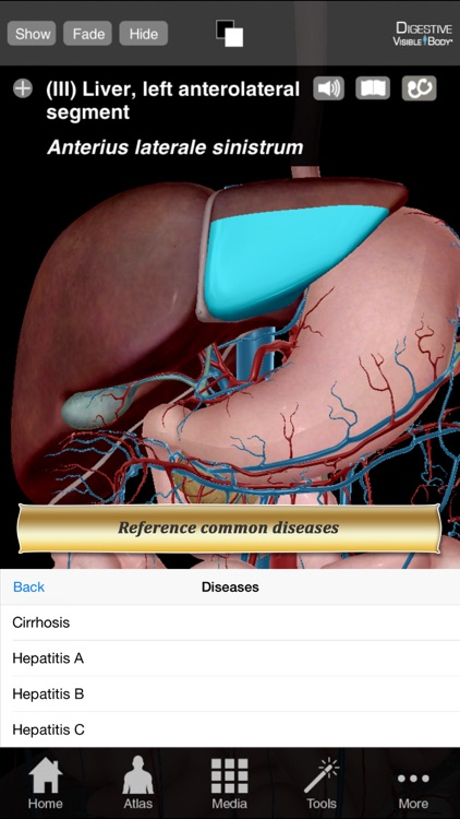 Digestive Anatomy Atlas: Essential Reference for Students and Healthcare Professionals screenshot-4