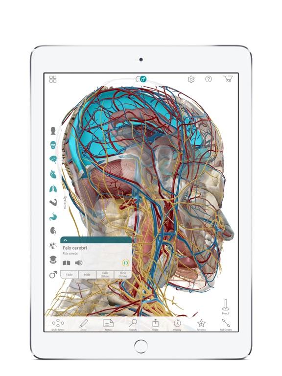 Human Anatomy Atlas – 3D Anatomical Model of the Human Body - App ...