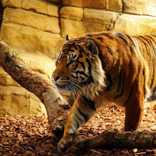 Best Zoo in Germany
