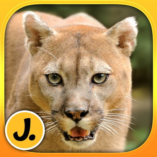Jungle and Rainforest Animals: puzzle game for little girls, boys and preschool kids - Free