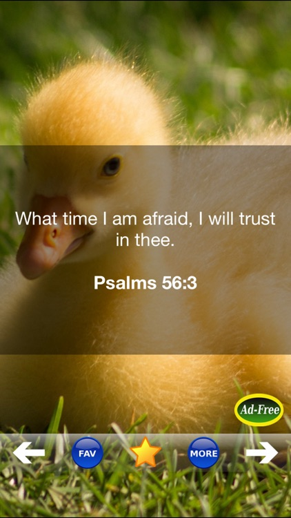 Bible Study for Kids FREE! Inspirational Verse of the Day App With Daily Devotionals & Inspirations!