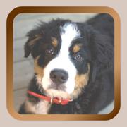 Puppy Dog Mah Jongg Solitaire