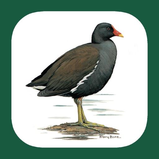 eGuide to the Handbook of Bird Identification for the Iberian Peninsula