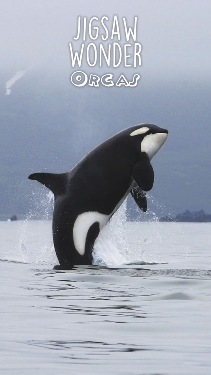 Orca Puzzles for Kids Jigsaw Wonder Edition screenshot-4
