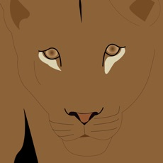 Activities of Lioness Arising