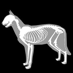 3D Cat Anatomy