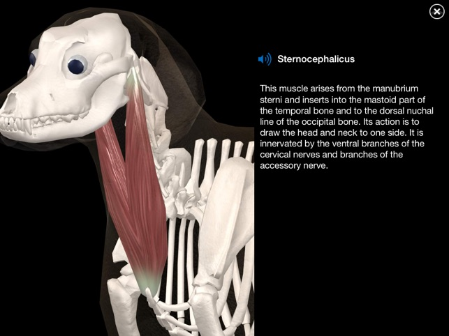 Dog Anatomy Canine 3d On The App Store