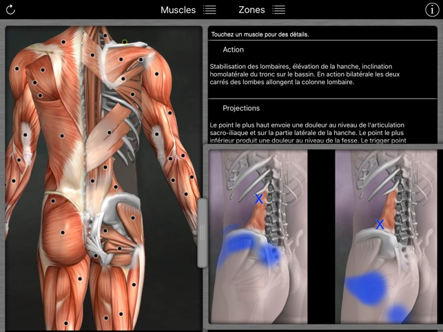 Trigger Point Anatomy Image collections - human anatomy diagram organs