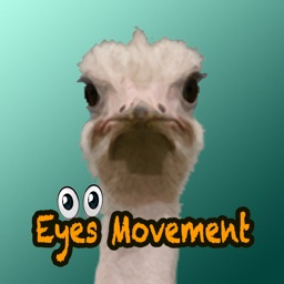 Eye movements with animals