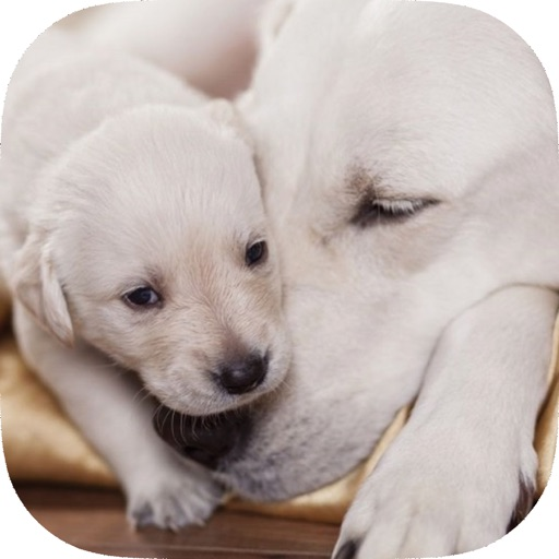 Be a Professional Help a Mother Dog Birth Fast & Safe