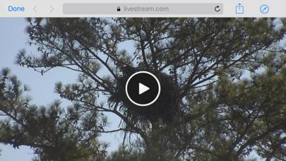 Berry College Eagle Cameras-3