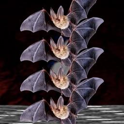 The BatCave