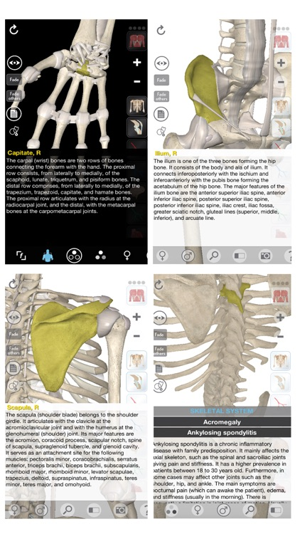3D Organon Anatomy - Skeleton, Bones, and Ligaments screenshot-1