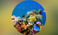 Coral Reefs Wiki +