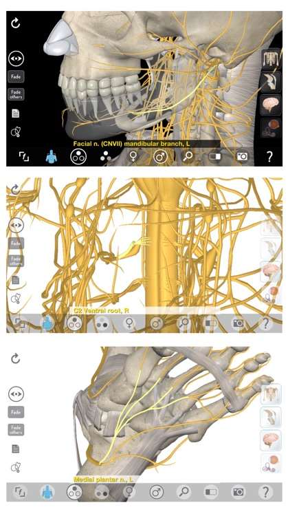 3D Organon Anatomy - Brain and Nervous System screenshot-2