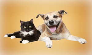 Dogs & Cats Zone