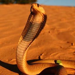 Southern Africa Snakes