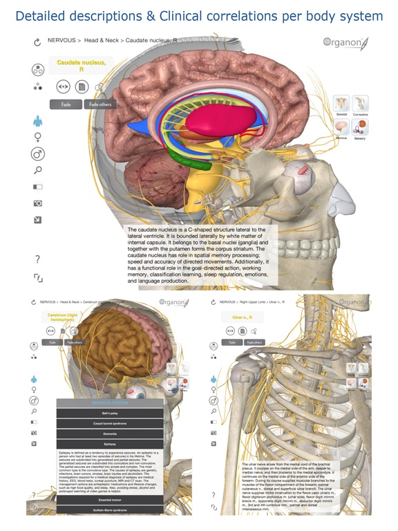 3d Organon Anatomy Brain And Nervous System App Price Drops
