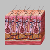 Dermatology by AIMapps