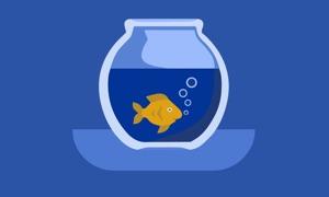 Aquarium TV™