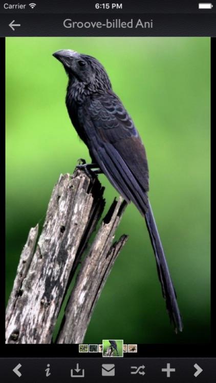 Cuckoos Info Kit
