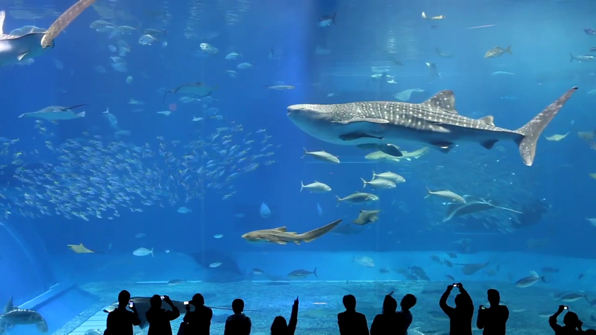 Real Aquariums HD screenshot 4