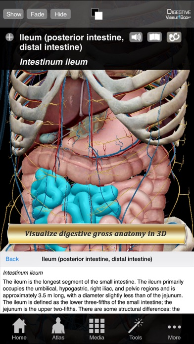 Digestive Anatomy Atlas: Essential Reference for Students