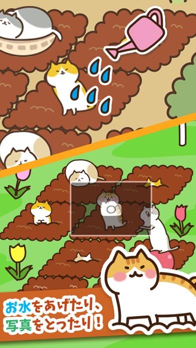 ねこ畑 -ほっこり畑でねこ育成-紹介画像2
