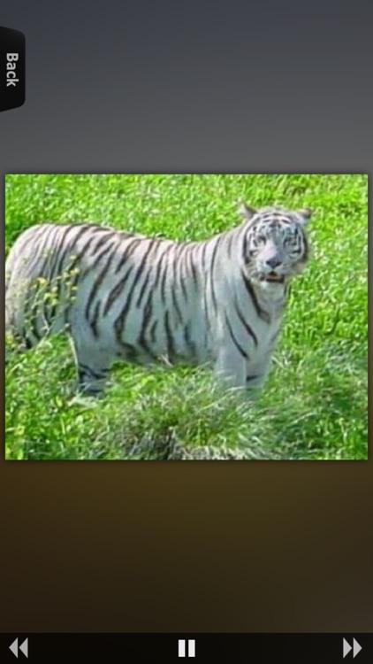 Animal Kingdom Guide screenshot-4
