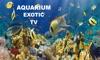 Aquarium Exotic TV