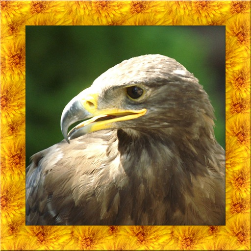 Wild Golden Eagle Simulator