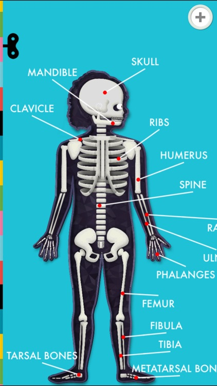 The Human Body by Tinybop screenshot-4