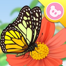 Butterfly - InsectWorld A story book about insects for children