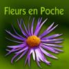 Wild Flowers HD