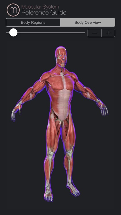 Muscular System Reference Guide screenshot-4